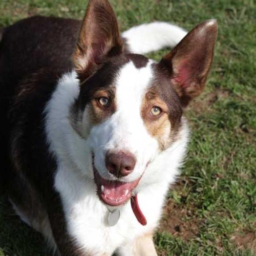 Dogs Needing Homes Cornwall