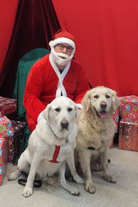 Santa Paws in Padstow