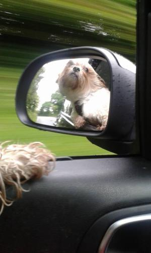 DOGS IN CARS...AM I LEGAL?